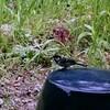 田舎暮らしあるある「鳥」
