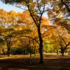 紅葉が美しい代々木公園で彼女とピクニックデートをしてきた。