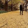 或る秋の日 ~ 佐野元春