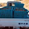 小長井牡蠣の水揚げ作業開始。