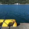 日向市の細島商業港にてキス釣りを行いました。