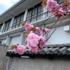 亀見 東寺