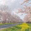 そうだ、秋田に行こう!2045年に人口が約半分になると言われている秋田県を観光してきたよ