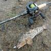 12月の野島沖堤防はハアハアアイナメが釣れるらしい(*'ω'*)