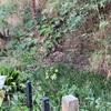旧石神井川の自然露頭  北区王子本町