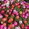 4-356   愛すべき花たち〜種まき組のプランターが綺麗に咲きました!!〜