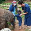 【ゾウの保育園】赤ちゃんと一緒に泥んこ遊び!【タイ子連れ旅29】