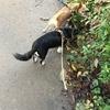 雨続き、台風後の愛犬デカチワワのマロンの日常