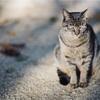 プラナー85㎜T*F1.4で野良猫撮影
