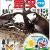 昆虫図鑑おすすめランキング11【子供、大人、人気、種類、幼稚園、小学生】