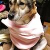 犬の服を買う