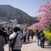 孤独のグルメ(1):伊豆半島の河津桜に負けない甘さの「わさび肉まん」