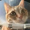 猫の鼻が赤い症状はいつの間にか治りました