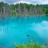 美瑛の観光名所「青い池」