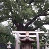 西宮市役所前|海清寺に立つ大きなクスの木