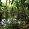 こんぶくろ池自然公園に行ってきました