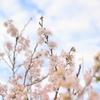 Nikon D3100使用:2018年3月、今月の風景【一眼レフ初心者のカメラ成長記録!】