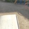 公園とビニール傘と悩み