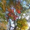 愛知大学の紅葉など