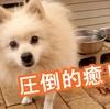 渋川動物公園のわんこたちが可愛すぎる!!