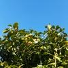 冬の空と山茶花