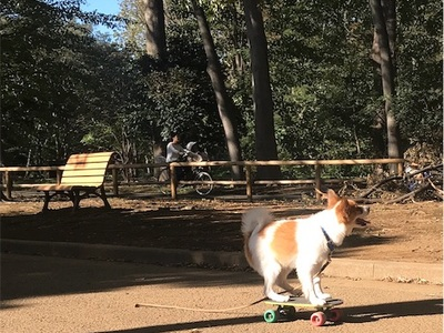 代々木公園ランニング〜天才スケボーわんちゃんに出会った〜