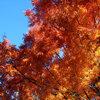 【秋の意外な落とし穴!?】交通を制するものは秋を制する!!