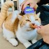 【猫学】動物行動学から猫の問題行動にアプローチ