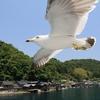 子連れで楽しめる!伊根町観光なら「伊根湾めぐり遊覧船」がおすすめ!