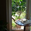 ゴムの木と月桃・・・寒さに弱い植物