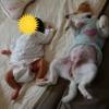 子供達と犬の成長記録