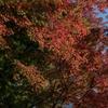 小石川後楽園の紅葉の色