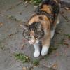 猫の俗説は本当なのか検証してみた。