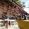 盆栽園の「成勝園」で桜のミニ盆栽を作ってきました