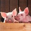 畜産動物における福祉と金の関係