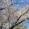 2020/4/5 お花見