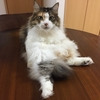 猫まみれの日(=^..^=)