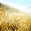 仙石原にすすきを撮りに行った話(あと金時山も登ったよ)