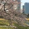 東京都心のお花見スポット③ 2019年の見頃は?のんびり静かにお花見したい!
