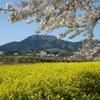 地元民が語る!春に行きたい新潟県下越地区のオススメ観光スポットランキングベスト5