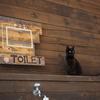 マンガアイランドのトイレ案内