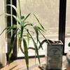 観葉植物達と真夏の過ごし方