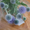 ルリタマアザミは花が長持ちでいいですね