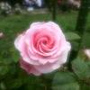 GIMP)ソフトフォーカスを試してみる。Bloom、ガウスぼかし。