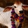 インドの州ごとの、牛肉タブーに関して