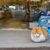 イスタンブール町歩きまとめ。猫がいっぱいいる国はやっぱり最高【トルコ一人旅】