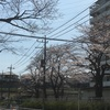 桜とか その4