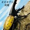 400円でありえないクオリティ😆王者の風格!!甲虫の王