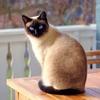 「こら」一つで犬みたいにおりこうな猫になる*おすすめの猫の飼い方・しつけ