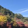 京都 嵐山方面の紅葉情報です。今年はちょっと色が濃い感じです。